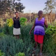 Soberania Alimentar na Agricultura Familiar em Tempos de Pandemia Muda a Rotina de Mulheres Trabalhadoras Rurais do Município de Coração de Jesus-MG